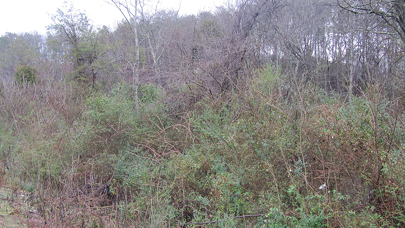 Absolute Auction – Sale #3 of 9: Approx. 15.34 Acres comprised of 75 Tax Parcels